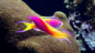 Colorful Fish on Coral Reef video