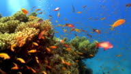 Colorful Fish on Vibrant Coral Reef video
