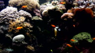 Colorful Fish video