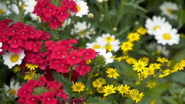 Colorful flowerbeds in summer city video