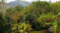 A colorful garden in the tropics video