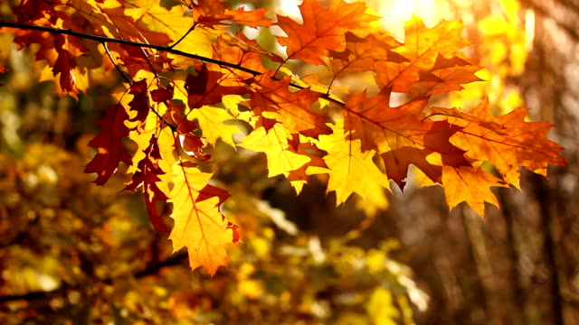 Colorful leaves on the wind, autumn season. video