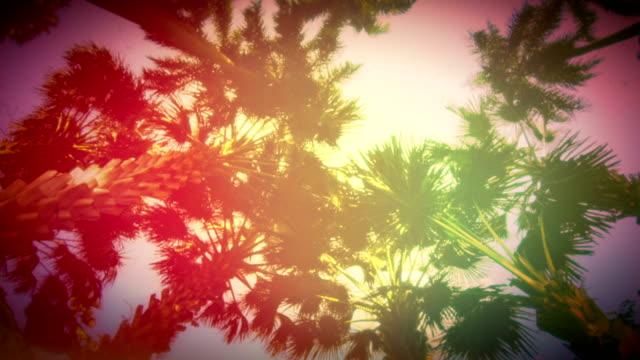 Colorful Palm Tree Time Lapse video