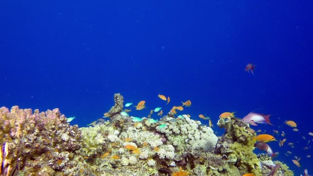 Colorful Reef and Lion-Fish video