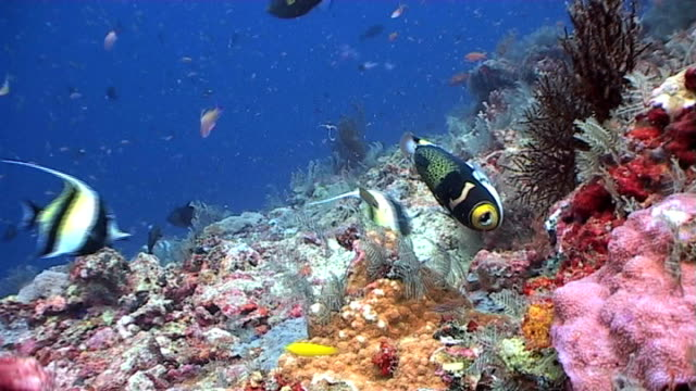 Colorful reef scene teeming with life 2 video