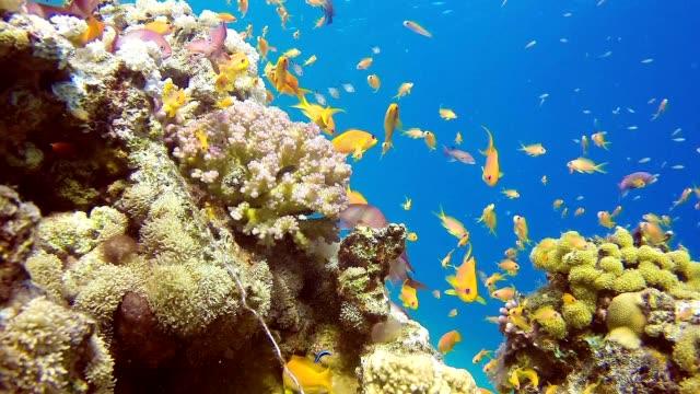 Colorful Seascape video