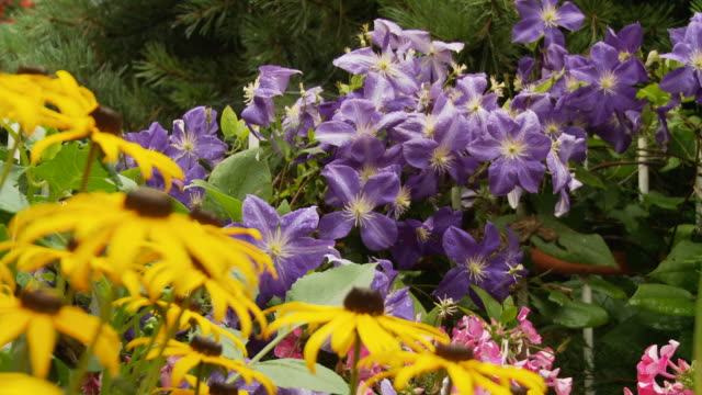 HD DOLLY: Colorful Temperate Flowers video