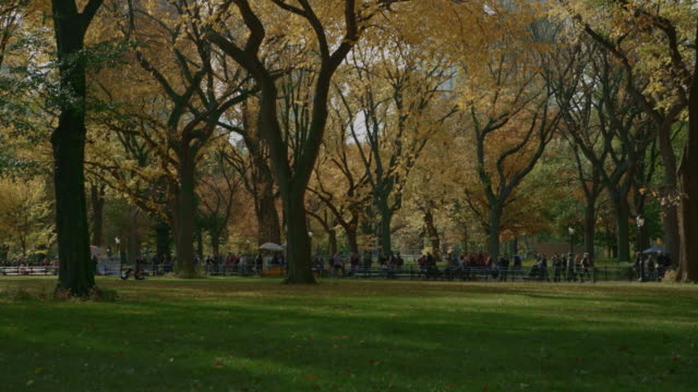 Colorful trees people walking in Central Park NYC video