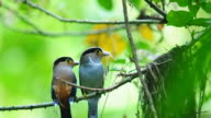 colorful tropical bird video