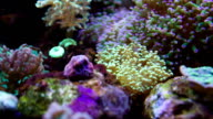 Colorful Underwater plants video
