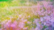 Colourfull flowering field video