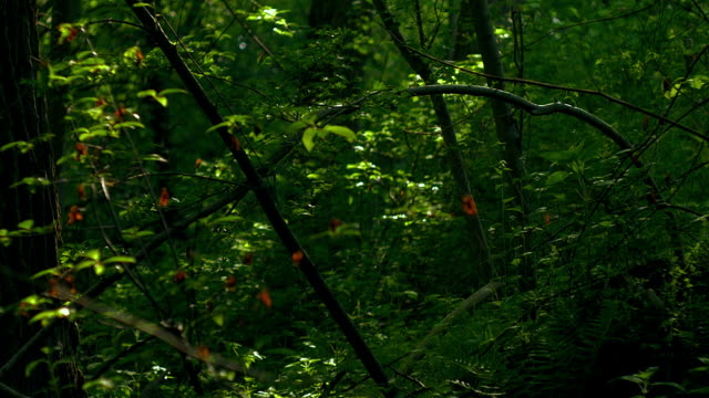 Colourfull green. Retro look Forest. Summer time video