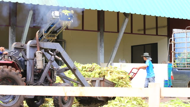 Combine Corn Harvester video