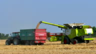 Combine harvester and tractor with trailer on harvest wheat video