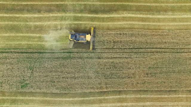 Combine harvester gathers the grain video