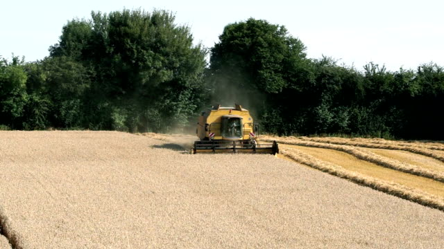 Combine harvester harvesting in European field   FO video
