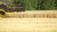 Combine harvester moving on wheat field video