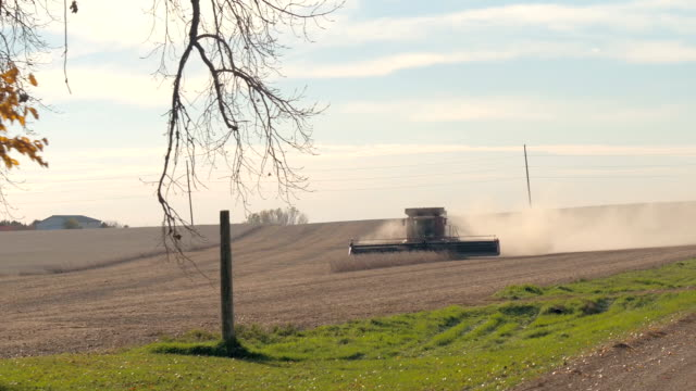 CLOSE UP: Combine harvester on agricultural farm cutting straw on dusty field video