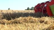 combine harvester thresh grain cereal in farmland at summer. FullHD video