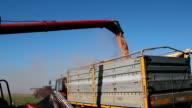 Combine Harvester Transferring Corn to Grain Trailer video