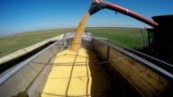 Combine Harvester Unloading Corn video