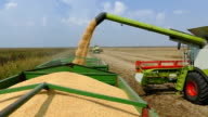 Combine harvester unloading soybean video