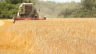 Combine harvesting a field of wheat video