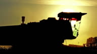 Combine harvesting at sunset video