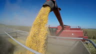 Combine Harvesting Corn and Unloading Grains into Tractor Trailer video