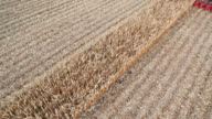 Combine Harvesting Fall Cornfield from Above video