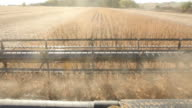 Combine Harvesting Fall Soybean Field video