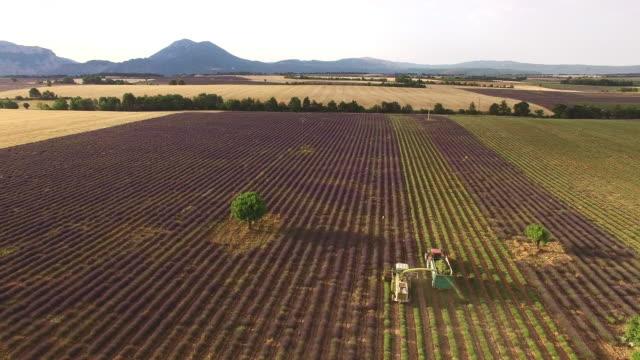 AERIAL Combine harvesting lavender in Provence video
