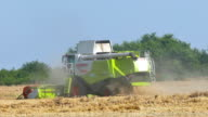 Combine Harvesting ripe wheat video