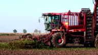 Combine the sugar beet harvest video