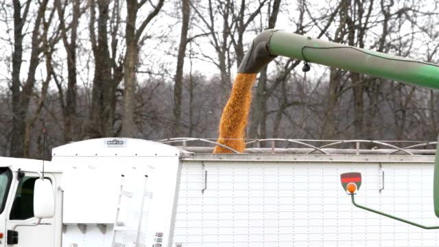 Combine Unloads Corn into Truck - Wide Shot video