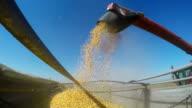 Combine Unloads Grainfeed Corn into a Farm Truck video