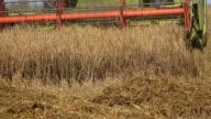 combine work at harvest in farmland. Seasonal work in field. 4K video