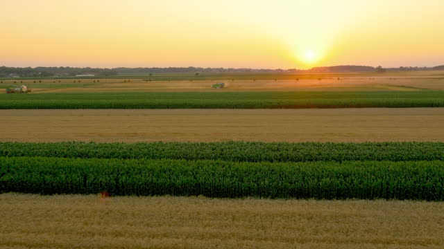 AERIAL Combines harvesting the wheat at sunset video