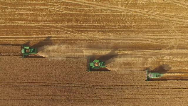 Combines in the field. video
