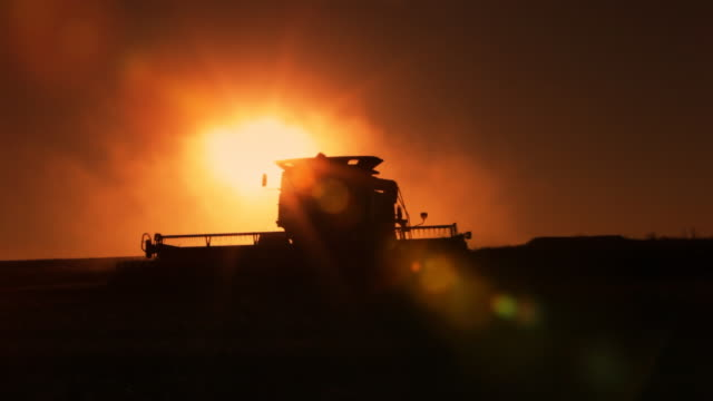 Combing at harvest time video