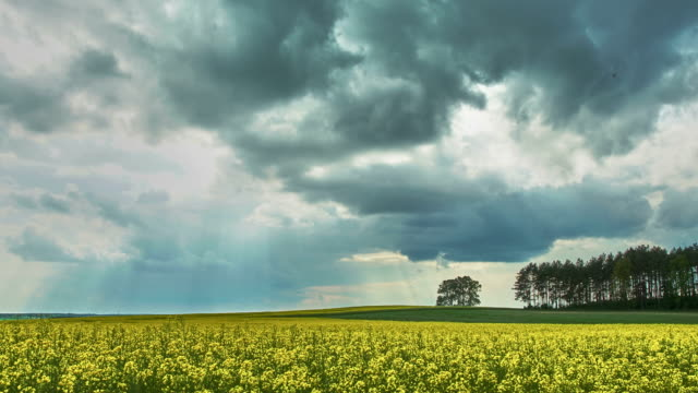 Coming storm - rape field - time lapse video