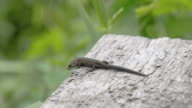 A common lizard on top of the roof in the forest video
