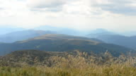 Common meadow-grass blown by wind in Carpathian Mountains video