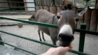 POV Concept, Feeding Donkey At Zoo video