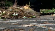 Concept: wipe out the thoughts - Sweeping dry leaves; close-up video