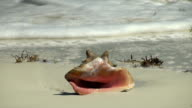Conch Shell video