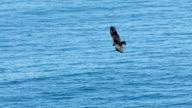 Condor video