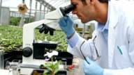 Confident botanist studies plant life in a nursery video