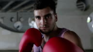 A confident boxer looking at the camera. video