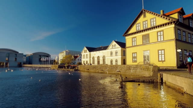 congestion of wild birds on a city lake in centre of Reykjavik in Iceland and buildings, sunny video